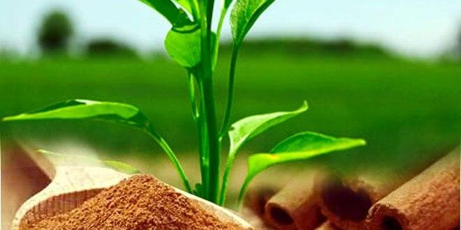 Saupoudrer de la cannelle moulue pour protéger vos plantes